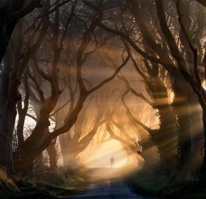amazing-tree-tunnels-9-1