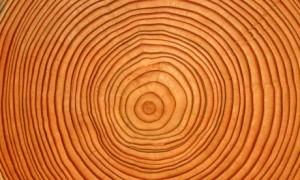 Cross-section-of-tree-tru-007
