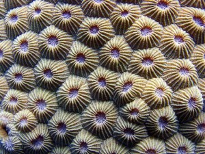 coral_img_1964